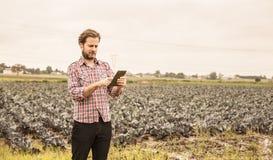 Фермер работая на использовании таблетки перед полем капусты Стоковая Фотография RF