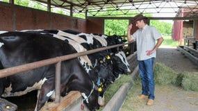 Фермер скотин стоковые фото