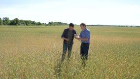 Фермер 2 стоя в пшеничном поле и трясет руки на заходе солнца видеоматериал