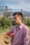Фермер с клетью в яблоневом саде стоковая фотография