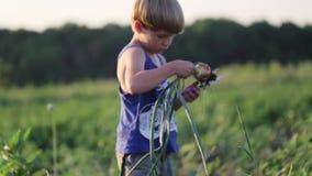 Фермер с луком рудоразборки семьи на поле органической фермы акции видеоматериалы