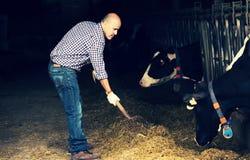 Фермер человека работая в коровнике стоковое фото rf