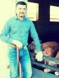 Фермер человека стоя в свинарнике Стоковая Фотография