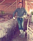 Фермер человека стоя в свинарнике Стоковое Фото