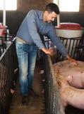 Фермер человека стоя в свинарнике Стоковое фото RF
