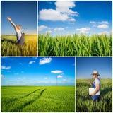 Фермер fields коллаж Стоковые Изображения RF