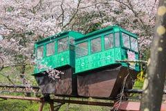 Фестиваль вишневого цвета на парке руин замка Funaoka, Shibata, Miyagi, Tohoku, Японии на April12,2017: Автомобиль наклона проход стоковая фотография