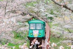 Фестиваль вишневого цвета на парке руин замка Funaoka, Shibata, Miyagi, Tohoku, Японии на April12,2017: Автомобиль наклона проход стоковые изображения