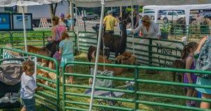 Фестиваль в зоопарке детей парка Petting стоковая фотография rf