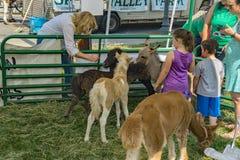 Фестиваль в зоопарке Парк-детей Petting стоковое изображение