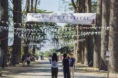 Фестиваль лаванды на ферме 123 Стоковая Фотография RF