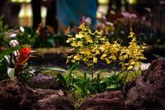 Фестиваль 2018 лимона Menton, экспозиция орхидеи Bollywood Стоковое Изображение