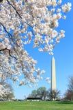 Фестиваль вишневого цвета весной Стоковые Фото