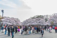 Фестиваль вишневых цветов в парке Ueno, токио, Японии Стоковые Изображения RF