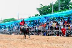 Фестиваль гонок буйвола 7-ого октября 2014 Стоковое Изображение
