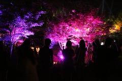 Фестиваль Канберра Nara Стоковая Фотография