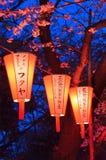 Фестиваль просмотра вишневого цвета (O-Hanami) Стоковые Изображения RF