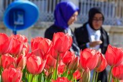 Фестиваль Стамбул тюльпанов, городская сцена Стоковая Фотография