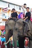 Фестиваль слона в Surin Стоковые Изображения RF