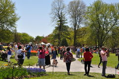 Фестиваль тюльпана в Albany, штат Нью-Йорк Стоковое фото RF