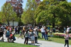 Фестиваль тюльпана в Albany, штат Нью-Йорк Стоковое Изображение RF