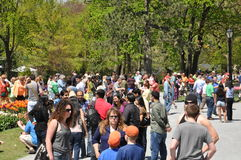 Фестиваль тюльпана в Albany, штат Нью-Йорк Стоковое Изображение