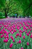 Фестиваль 2013 тюльпана Оттавы стоковые фото