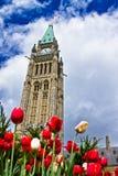 Фестиваль 2013 тюльпана Оттавы Стоковая Фотография RF