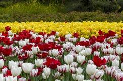 Фестиваль тюльпана Оттавы Стоковые Изображения RF