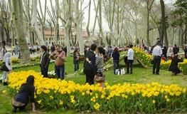 Фестиваль тюльпана Стамбула Сезонные фестивали тюльпана отпразднованные внутри стоковые изображения