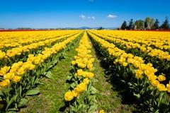 Фестиваль тюльпана Стоковое фото RF