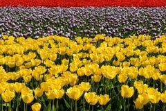 Фестиваль тюльпана Стоковое Фото