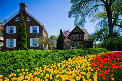 Фестиваль тюльпанов Стоковая Фотография RF