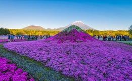 Фестиваль Фудзи Shibazakura Стоковое фото RF
