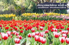 Фестиваль флоры весь цветок в зиме Chiang Rai Таиланде Стоковое Изображение