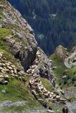 Фестиваль чабана Альпов стоковое изображение