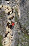 Фестиваль чабана Альпов стоковое изображение rf