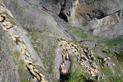 Фестиваль чабана Альпов стоковые изображения rf