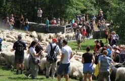 Фестиваль чабана Альпов стоковое фото rf