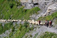 Фестиваль чабана Альпов стоковые фото