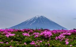 Фестиваль Японии Shibazakura Стоковые Фото