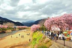 Фестиваль Kawazu Сакуры Стоковые Изображения