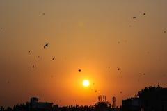 Фестиваль Uttrayan змея захода солнца/sankranti Гуджарат Makar, Индия Стоковое фото RF