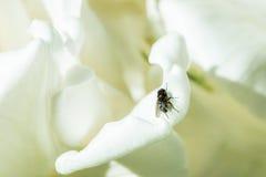 Фея радуги Стоковая Фотография RF