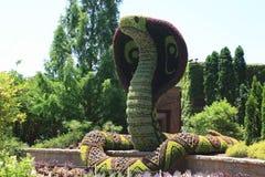 Фигурная стрижка кустов змейки Стоковое фото RF