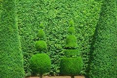 Фигурная стрижка кустов стоковое изображение
