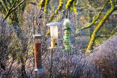 Фидеры птицы со смешанными семенами в красивом саде во время замороженной зимы стоковые изображения rf