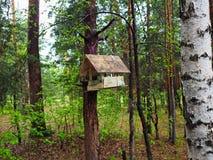 Фидер птицы в древесинах стоковое изображение rf