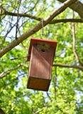 Фидер птицы на дереве в древесинах Стоковое Изображение