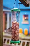 Фидер птицы с семенами на дождливый день Стоковые Изображения